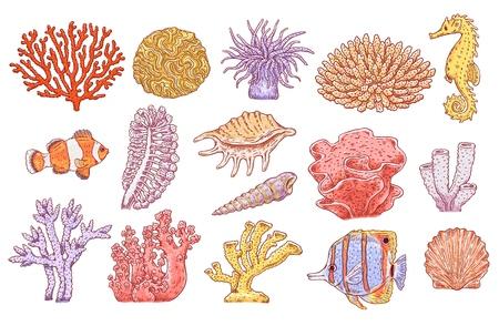 Vektor tropische Unterwasserkorallen, Fische, Muscheln und Jakobsmuscheln. Aquatische Rifftiere und Pflanzen. Handgezeichnete Sammlung von Meeresflora und -fauna. Isolierte Abbildung