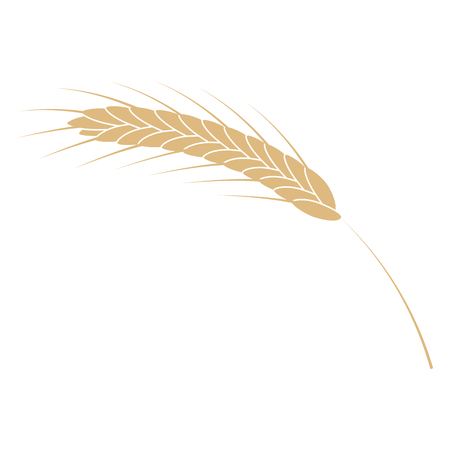 Vector illustration of cereal ear simple icon in flat style isolated on white background. Ripe yellow spike of grain plant for bakery, organic farming food or beer design.