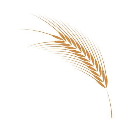 Vector illustration of barley ear simple icon in flat style isolated on white background - ripe yellow cereal spike, grain plant for bakery, organic farming food or beer design.
