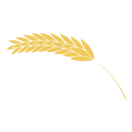 Vector illustration of wheat ear simple icon in flat style isolated on white background. Ripe yellow cereal spike - grain plant for bakery, organic farming food or beer design. Ilustracja