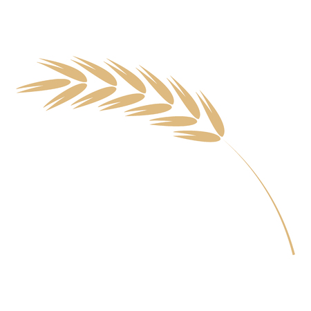 Cereal ear simple icon in flat vector illustration - ripe yellow agricultural seed of grain plant isolated on white background. Grain plant spike for natural farming organic eating concept. Illustration