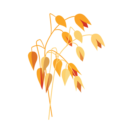 Dojrzałe suche ucho owsa na łodydze w płaski - ilustracja wektorowa żółtego całego zboża skok płatków owsianych na białym tle. Roślina zbożowa dla koncepcji zdrowego i ekologicznego jedzenia. Ilustracje wektorowe