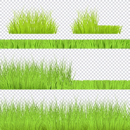 Vector green grass bush, borders set for summer landscape design on transparent background. Natural decoration element for parks, gardens or rural fields scenery. Lawn or plants object. Illustration