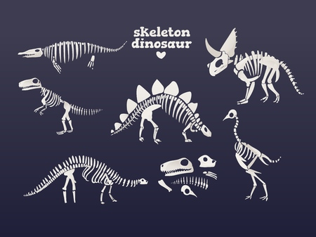 Vector tyrannosaurus, diplodocus, triceratops dinosaur fossil skeleton set. Prehistoric predator, jurrasic giant animal icon. Paleontologu and archeology artifact. T-rex monster white silhouette. 矢量图像