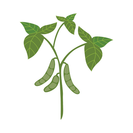 Ripe green soy pods on stem with leaves in flat style - vector illustration of whole soybean branch isolated on white background. Rich in protein bean plant for healthy and organic eating concept.