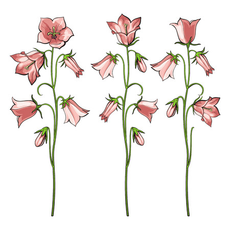 Pink bellflowers vector illustration set with three variations of floral branches with buds and blossoms on green stems in sketch style isolated on white background for elegant floral design.