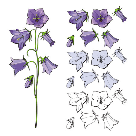 Vector bellflower blossoms, stems, leaves and bouquets set. Natural summer, spring meadow plants with blue red purple petals, monochrome. Floral natural illustration for poster, textile decoration Çizim