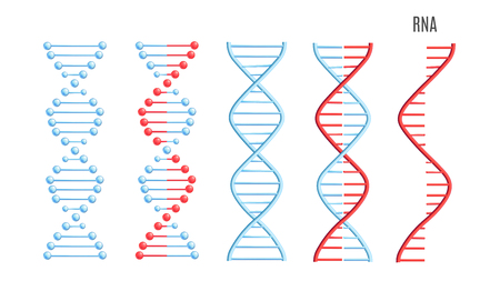 Vector DNA and RNA molecule, structure with chromosomes set. Helix spiral with genetic code. Molecular biology andgenetic engineering studies. Biotechnology and genes science, education design element