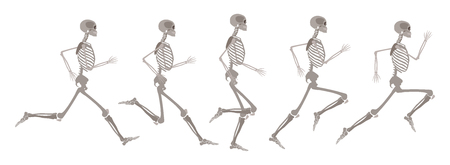 Vector human skeleton in motion set. Running human body in different stages. Scientific and anatomical mockup for education. Skull, bones in action on isolated background.