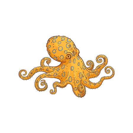 Vector yellow octopus sketch icon. Underwater invertebrate animal with tentacles. Hand drawn marine creature, seafood restaurant, cafe menu design element. Isolated illustration