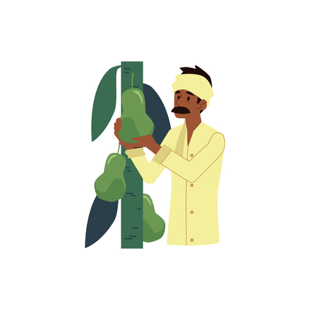 Vector cheerful indian farmer wearing traditional headscarf collecting green pears from tree. Rural india, pakistan or bangladesh village male character, agriculture industry worker.