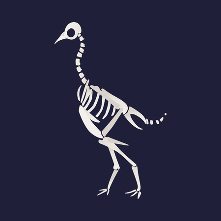 White skeleton and bones of a caudipteryx. Skeleton of a prehistoric dinosaur, caudipteryx in flat cartoon style, vector illustration. Illustration