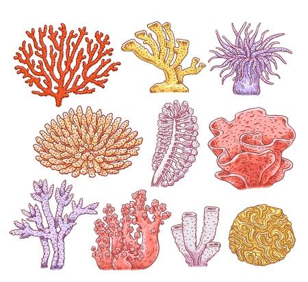 Conjunto de varios tipos de corales, plantas y animales esponjosos submarinos de acuario. Colección submarina marina del océano de flora y fauna. Ilustración de esbozo de vector dibujado a mano de corales marinos. Ilustración de vector