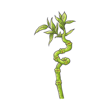 Bamboo green stalk with leaves in sketch style isolated on white background - hand drawn vector illustration of chinese or japan traditional plant for natural floral design. Ilustração