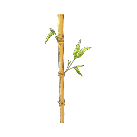 Brown bamboo stick with green leaves in sketch style isolated on white background - hand drawn vector illustration of traditional asian natural element for oriental floral design.