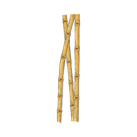 Bundle of brown bamboo sticks in sketch style isolated on white background - hand drawn vector illustration of traditional asian wooden element for oriental natural design.