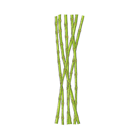 Bundle of green bamboo stems in sketch style isolated on white background - hand drawn vector illustration of traditional asian plant sticks for oriental natural design. Ilustracja