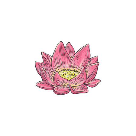 Lotus vector illustration - hand drawn pink water lily isolated on white background. Beautiful gentle flower in sketch style - traditional floral element for spa or yoga natural design.
