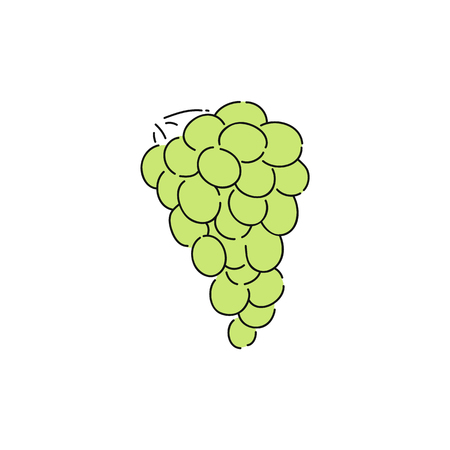 Fresh green grapes in vine, drawing of sweet healthy natural fruit snack for good nutrition, bunch of berries in grapevine. Isolated sketch style vector illustration on white background. Illustration