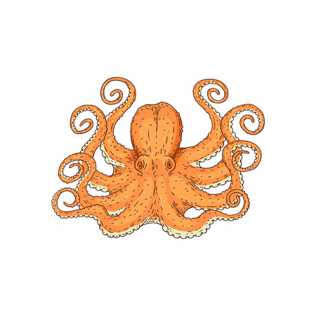 Hand drawn designed yellow sea octopus element for label and poster or restaurant menu template. Marine underwater animal sketch vector isolated on the white background.