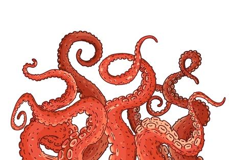 Tentáculos de pulpo rojo que se extienden hacia arriba, calamares como partes del cuerpo de animales marinos que sobresalen del marco, cortados para el diseño de alimentos o marcos, ilustración de vector de dibujo de dibujos animados aislado sobre fondo blanco