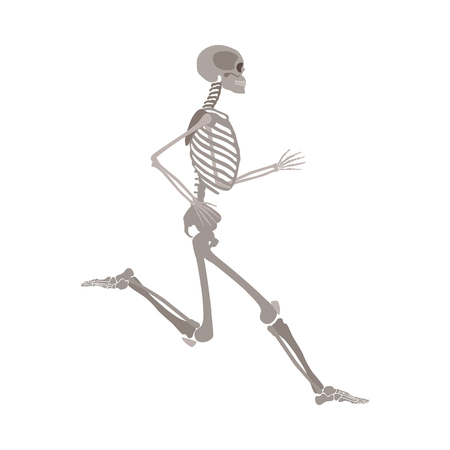 Anatomically correct skeleton running flat vector illustration isolated on white background. Halloween party or medical design template showing human bones in motion.