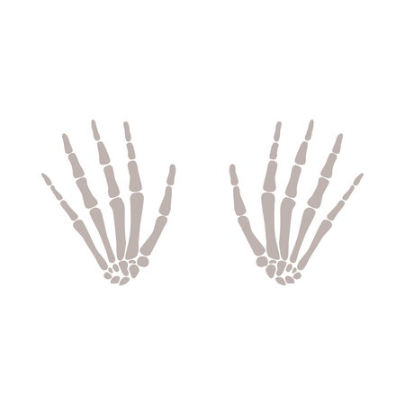 Bones of both hands of human skeleton vector flat illustration isolated on white background. Anatomical fingers element for scientist and halloween horror design. Illustration