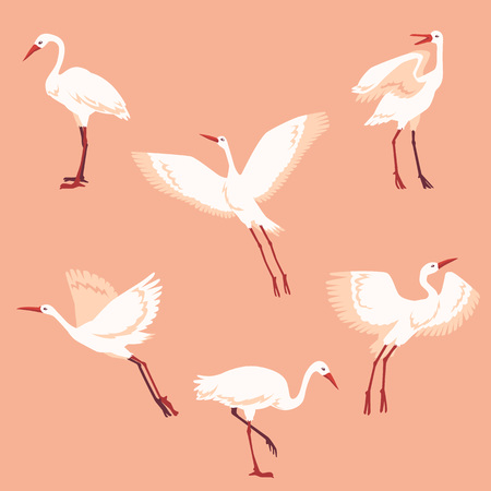 Vector hand drawn crane birds in different positions set. Sketch flying white animals taking off, cleaning feathers, standing. Elegant storks, symbols of china and asia.