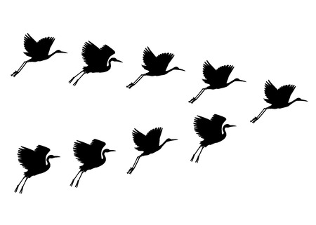 Vector hand drawn crane flock of birds black silhouette. Sketch flying animals migrating in group. Elegant storks, symbols of china and asia.