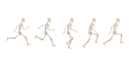 Collection of running human skeletons - set of different stages of running, anatomy of a runner and bones. Medical vector illustration isolated on white background Archivio Fotografico - 122455455