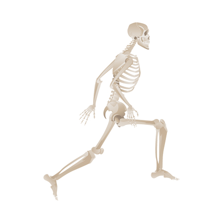 Human skeleton jumping mid-air while running, anatomy of bones while jogging - vector illustration isolated on white background Иллюстрация