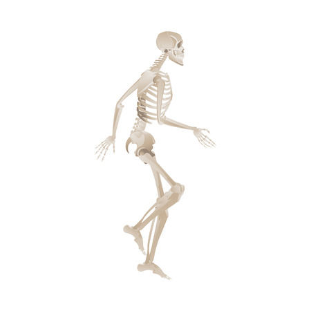 White skeleton running or walking in dynamic posture - human body moving reference - vector illustration isolated on white background