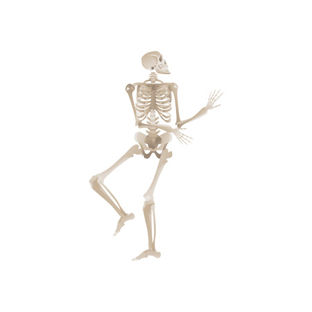 Vector funny human skeleton dancing. Body anatomy with skull, bones having fun. Dead man moving in funny position. halloween holiday, scary design decoration. Stock Vector - 122414958
