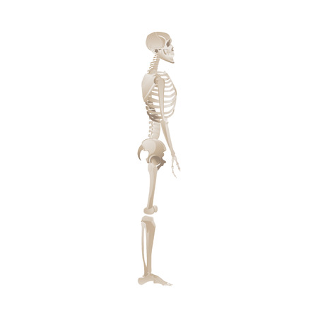 Vector funny human skeleton dancing. Body anatomy with skull, bones having fun. Dead man moving in funny position. halloween holiday, scary design decoration. Illustration