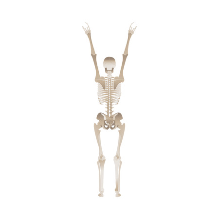 Cheerful skeleton dancing and jumping with hands up for Halloween party design. Scary objects vector illustration isolated on white background.