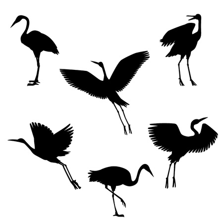 Vector hand drawn crane birds in different positions black silhouette set. Sketch flying animals taking off, cleaning feathers, standing. Elegant storks, symbols of china and asia.