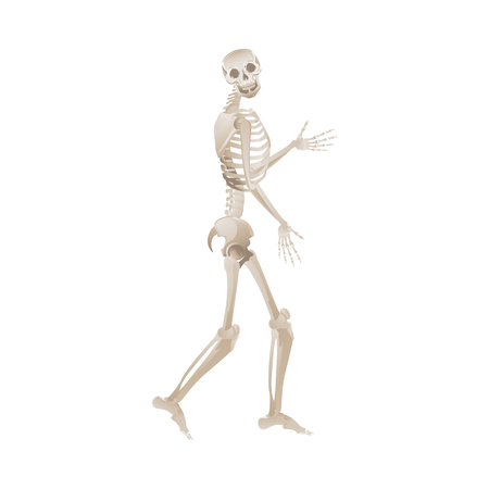 Vector funny human skeleton dancing. Body anatomy with skull, bones having fun. Dead man moving in funny position. halloween holiday, scary design decoration. 일러스트