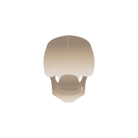 Human skull back view from behind - anatomy reference of white skeleton head facing the other way around. Medical vector illustration isolated on white background.