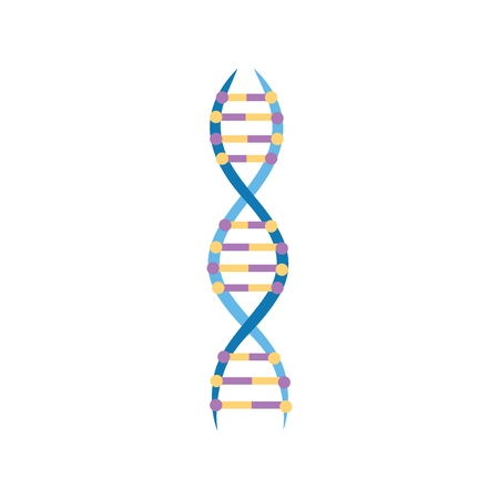 Scientific or educational icon structure of a DNA molecule vector illustration isolated on white background. The spiral molecule of DNA gene in a flat style.