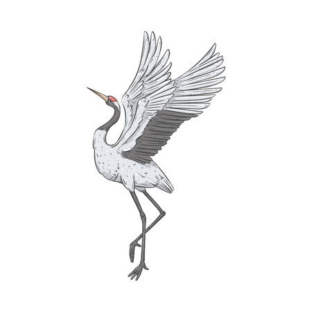 Red-crowned crane stands on one leg with wings raised up sketch style, vector illustration isolated on white background. Side view of hand-drawn naturally dancing Japanese bird Illusztráció