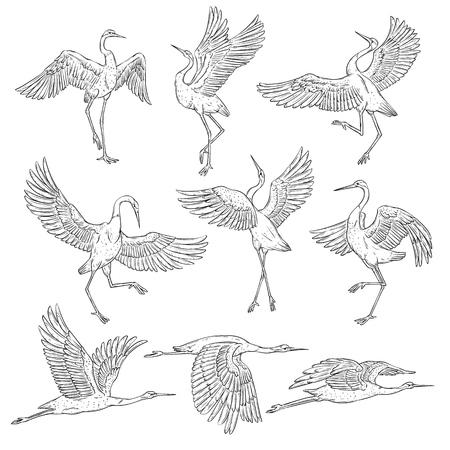 Set di gru giapponesi in bianco e nero, uccelli in diverse posizioni e pose. Pagina del libro da colorare degli elementi della pittura asiatica tradizionale, illustrazione di vettore piana isolata su fondo bianco.