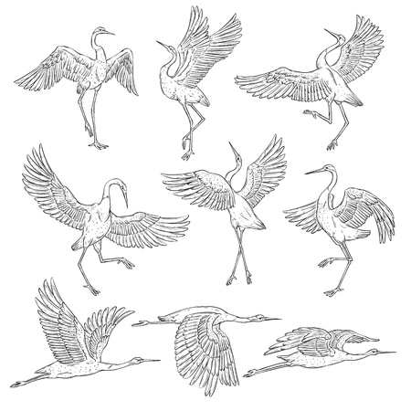 Set of black and white japanese cranes, birds in different positions and poses. Coloring book page of traditional asian painting elements, flat vector illustration isolated on white background.