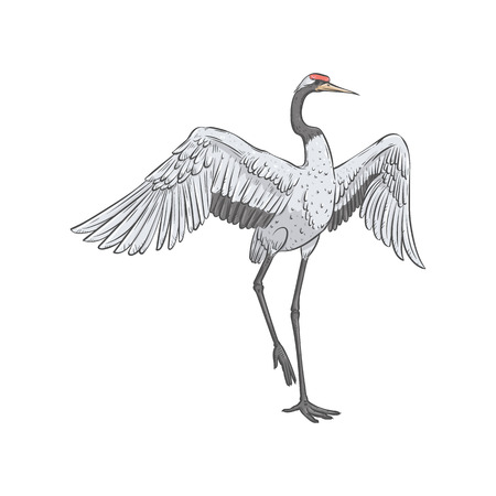 Red-crowned crane stands on one leg with spread wings sketch style, vector illustration isolated on white background. Front view of hand-drawn naturally dancing Japanese bird
