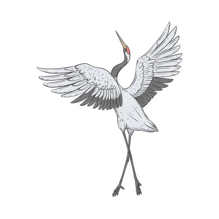 Red-crowned crane stands on one leg with wings raised up sketch style, vector illustration isolated on white background. Back view of hand-drawn naturally dancing Japanese bird