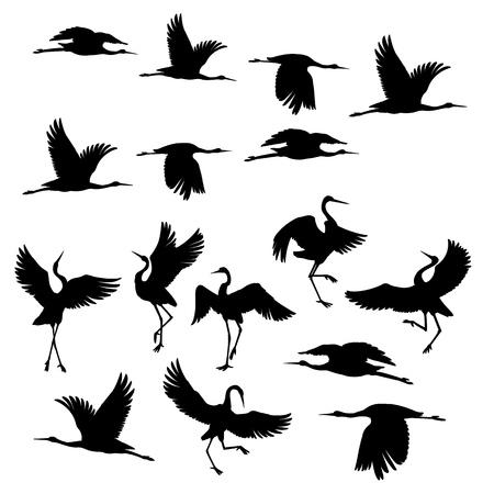 Iconos de tinta negra silueta o sombra de pájaros grúa o garzas volando y de pie. Grupo de cigüeñas esquema plantilla o ilustración de vector de fondo creativo aislado en blanco.
