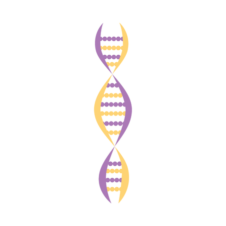 Colorful DNA molecules showing the helical structure or twisted spiral chromosome strand for scientific or medical banner vector illustration isolated on white background.