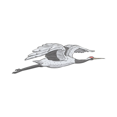 White Japanese crane flying in air, hand drawn style beautiful cartoon drawing of majestic bird mid-flight, flat vector illustration isolated on white background Ilustração