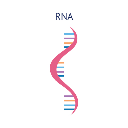 Scientific or educational icon structure of a RNA molecule vector illustration isolated on white background. The spiral molecule of RNA gene in a flat style. Illustration