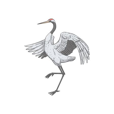 White Japanese crane dancing with one lifted leg, side view of hand drawn painting of asian bird standing with open wings, element of asian culture - vector illustration isolated on white background