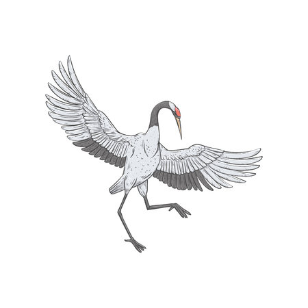 White crane dancing with open wings, beautiful japanese style hand drawn bird in elegant pose, cartoon drawing of wild stork. Vector illustration isolated on white background  イラスト・ベクター素材